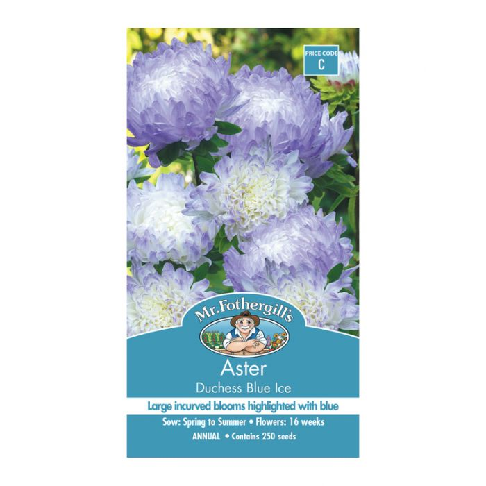 Mr Fothergill's Aster Duchess Blue Ice  ] 5011775058184 - Flower Power