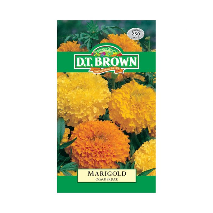D.T. Brown Marigold Crackerjack  ] 5030075004899 - Flower Power