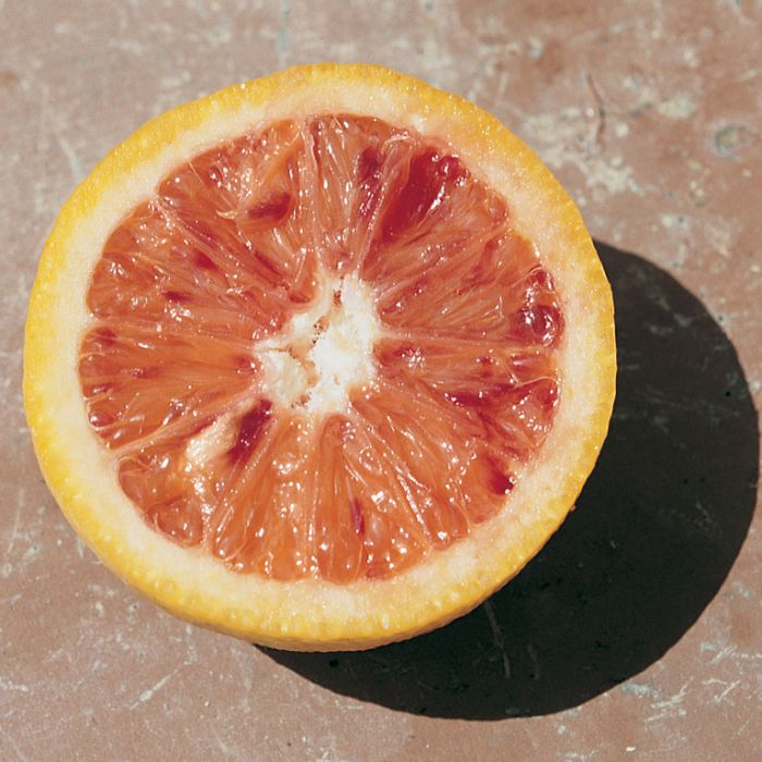 Tarocco Rosso Blood Orange  ] 9003840140P - Flower Power