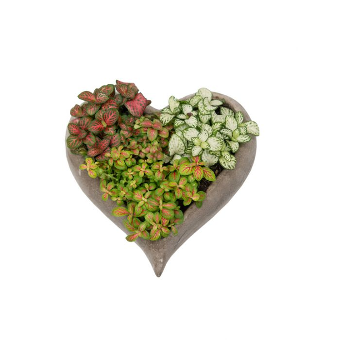 Living Trends Concrete Heart Planter  ] 9010069999P - Flower Power