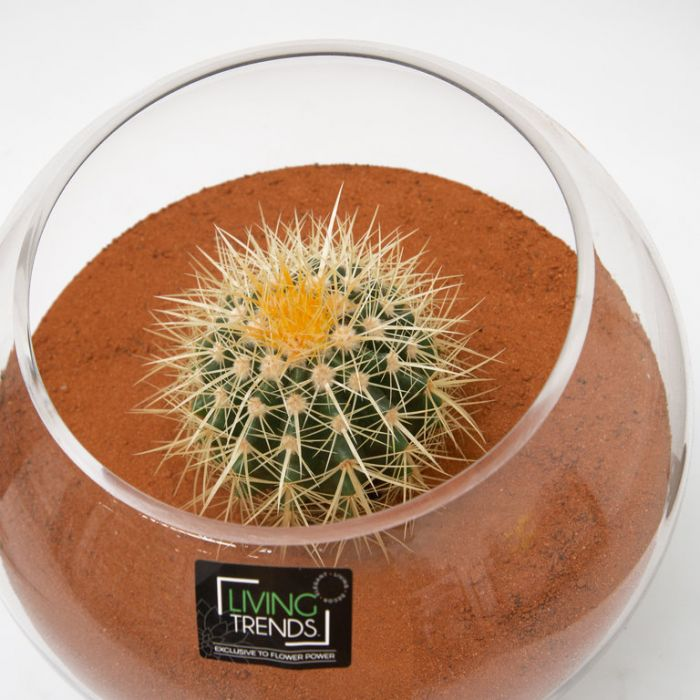 Living Trends Fish Bowl Glass Terrarium Cactus  ] 9010099999 - Flower Power