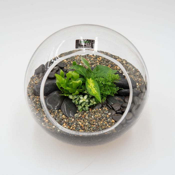 Living Trends Diagonal Cut Glass Terrarium  ] 9010439999 - Flower Power
