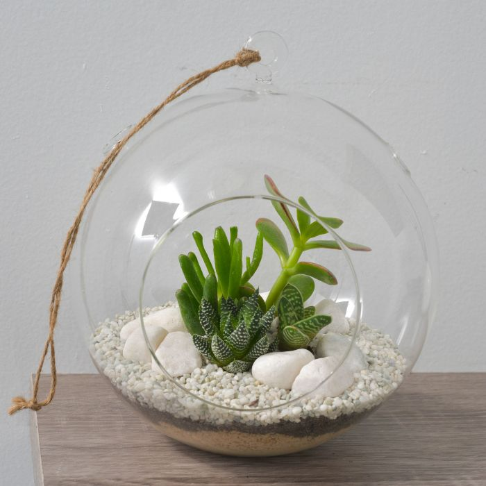 Living Trends Glass Hanging Ball Terrarium  ] 9011429999 - Flower Power