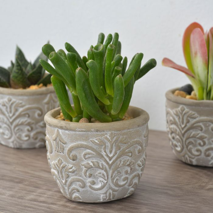 Living Trends Fleur-de-lis Potted Succulent  ] 9012479999 - Flower Power