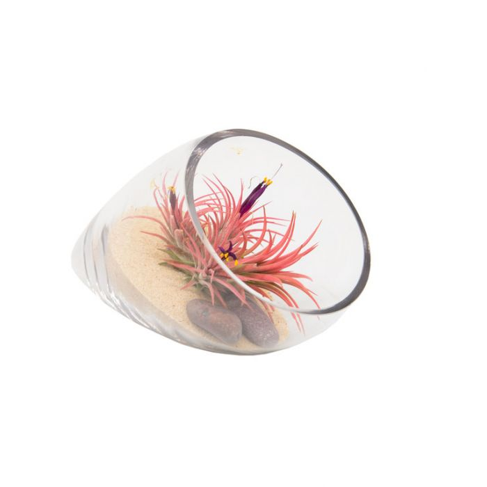 Living Trends Conical Glass Terrarium  ] 9020029999 - Flower Power