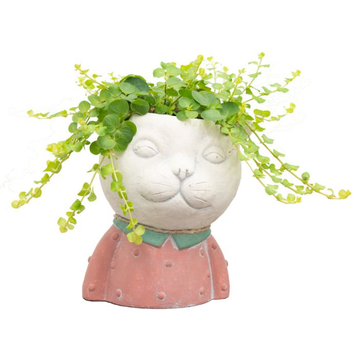 Living Trends Cat Planter  ] 9022089999 - Flower Power