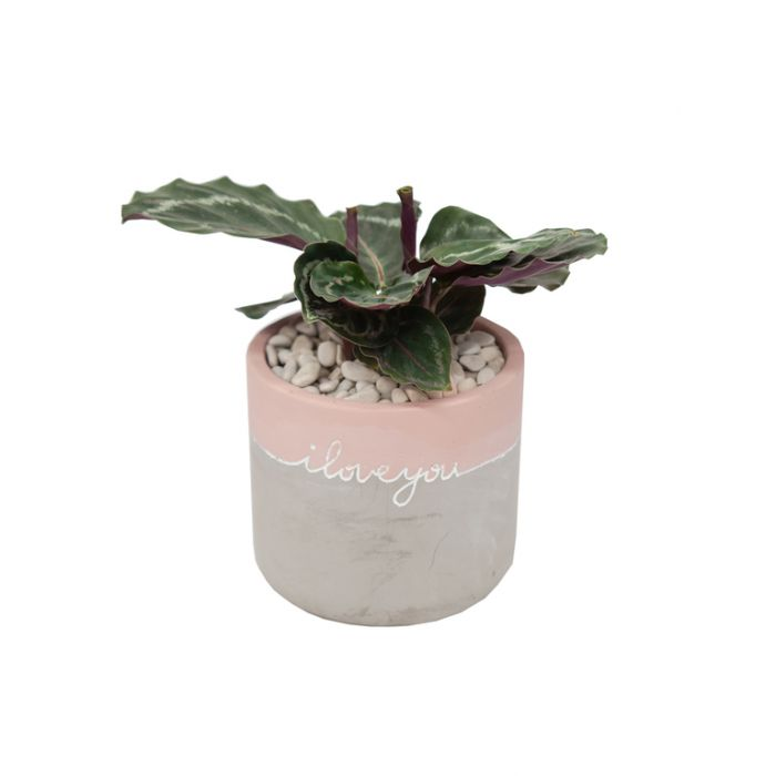 Living Trends Concrete I Love You Planter  ] 9022309999 - Flower Power