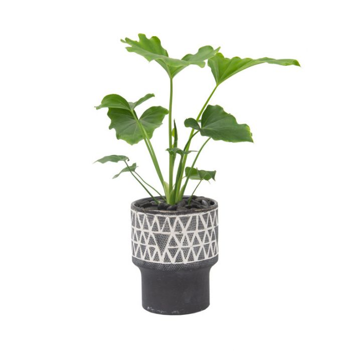 Living Trends Ceramic Grey Cherokee Planter  ] 9024509999 - Flower Power