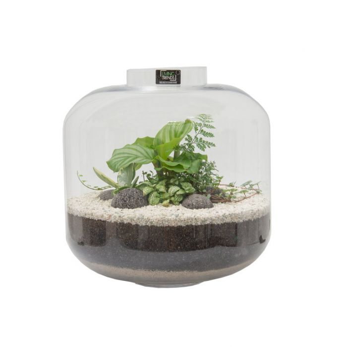 Living Trends Glass Bottle Terrarium  ] 9026109999 - Flower Power