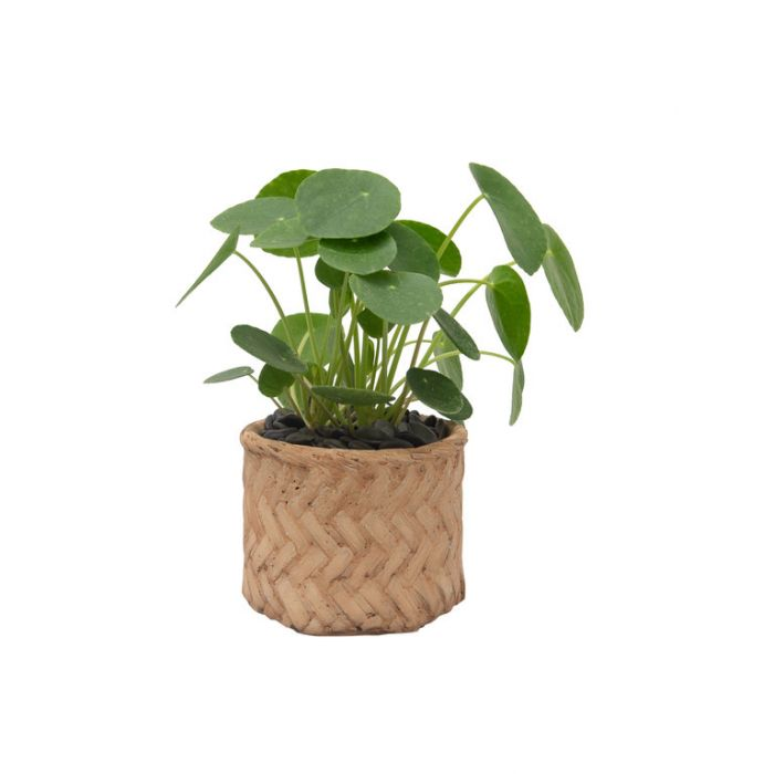 Living Trends Ceramic Straw Basket Planter  ] 9028119999 - Flower Power