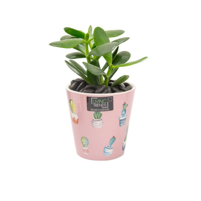 Living Trends Ceramic Pink Cabo Planter  ] 9028139999 - Flower Power