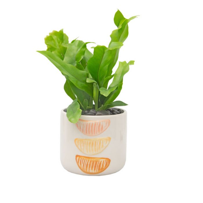 Living Trends Ceramic Citrus Planter  ] 9028979999 - Flower Power