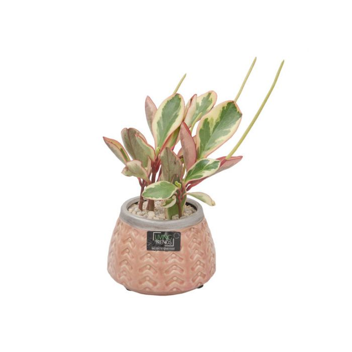 Living Trends Ceramic Pink Planter  ] 9029109999 - Flower Power