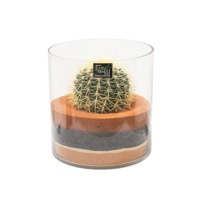 Living Trends Cylinder Glass Terrarium Cactus  ] 9029249999 - Flower Power