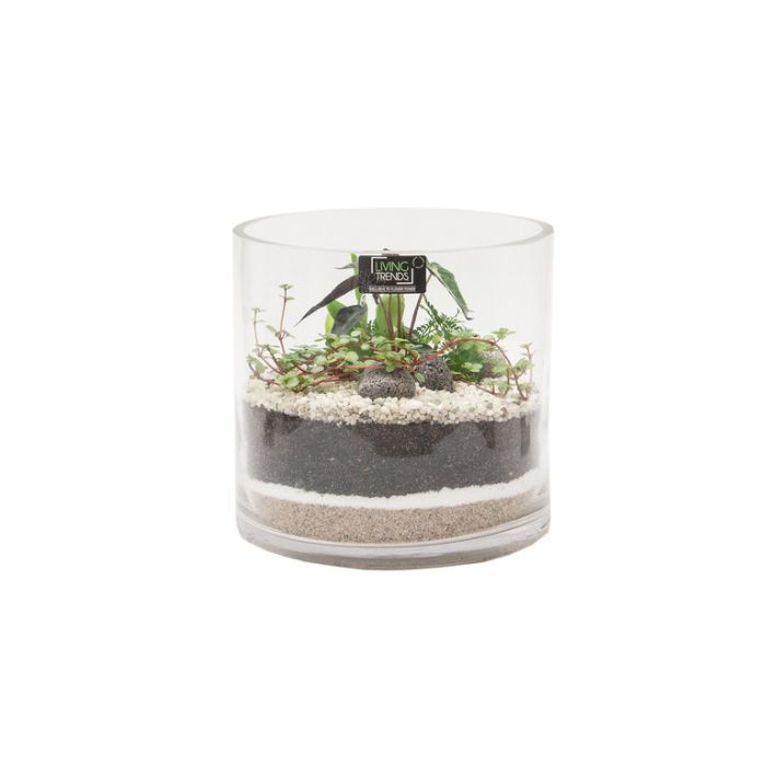 Living Trends Cylinder Glass Terrarium  ] 9029569999 - Flower Power
