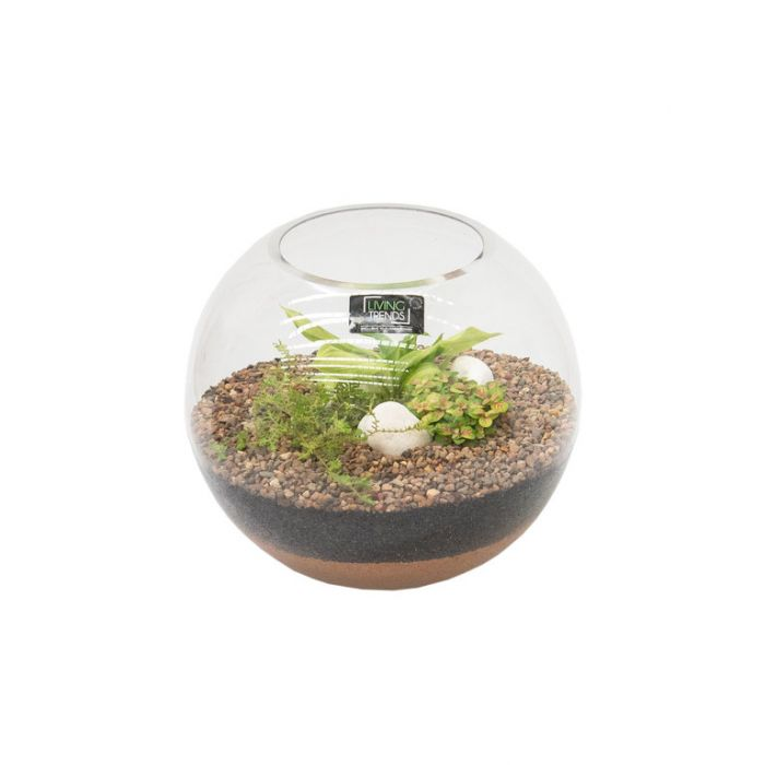 Living Trends Fish Bowl Glass Terrarium  ] 9029599999 - Flower Power