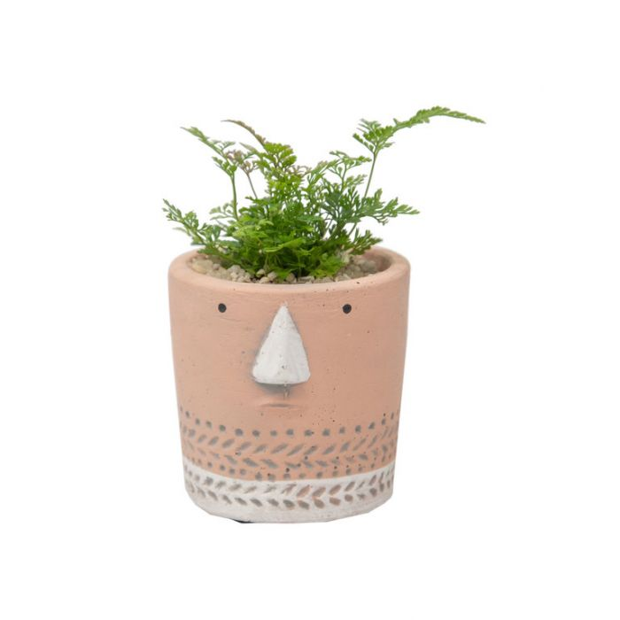 Living Trends Face Planter  ] 9029759999P - Flower Power
