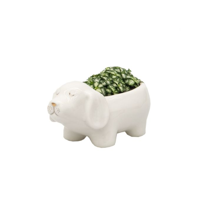 Living Trends Dog Planter  ] 9030259999 - Flower Power