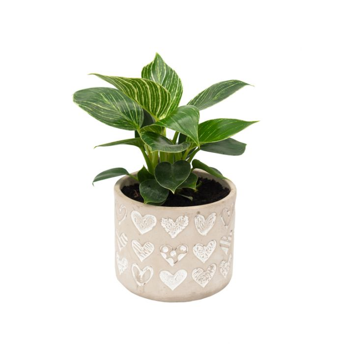 Living Trends Concrete Heart Planter  ] 9030729999 - Flower Power