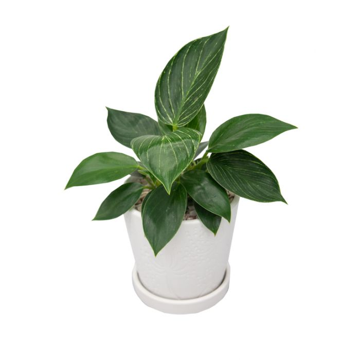 Living Trends Ceramic Flora Planter  ] 9030829999 - Flower Power