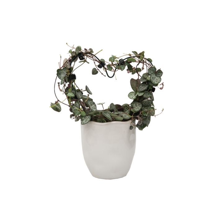Living Trends Ceramic Mika Planter  ] 9030839999P - Flower Power