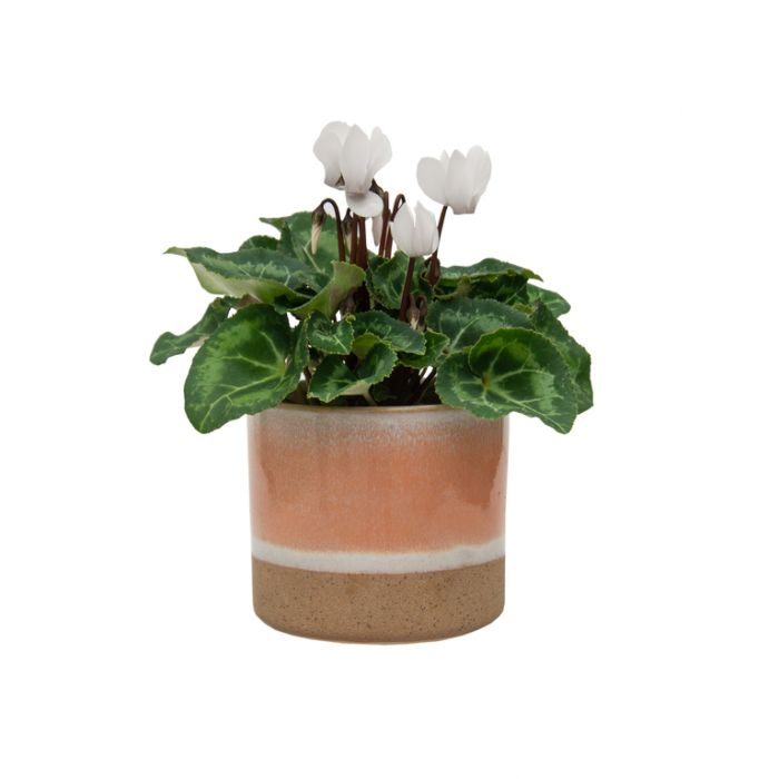 Living Trends Ethan Blush Planter  ] 9032669999 - Flower Power