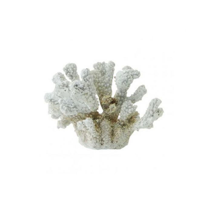 Coral Décor White  ] 9315138084169P - Flower Power