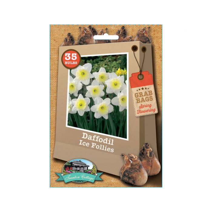 Daffodil Ice Follies  ] 9315774030674 - Flower Power