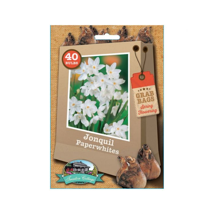 Jonquil Paperwhite  ] 9315774030735 - Flower Power