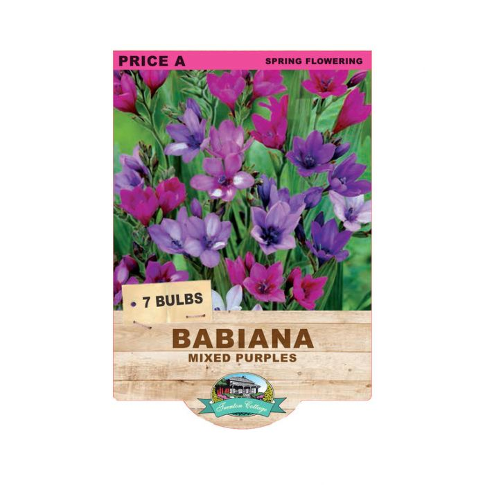 Babiana Mixed Purples  ] 9315774070601 - Flower Power
