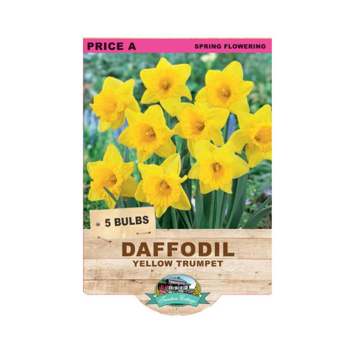 Daffodil Yellow Trumpet  ] 9315774070656 - Flower Power