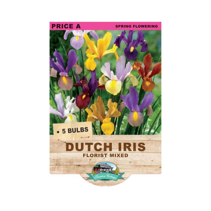 Dutch Iris Florist Mixed  ] 9315774070663 - Flower Power