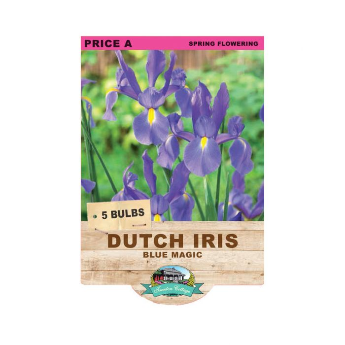 Dutch Iris Blue Magic  ] 9315774070670 - Flower Power