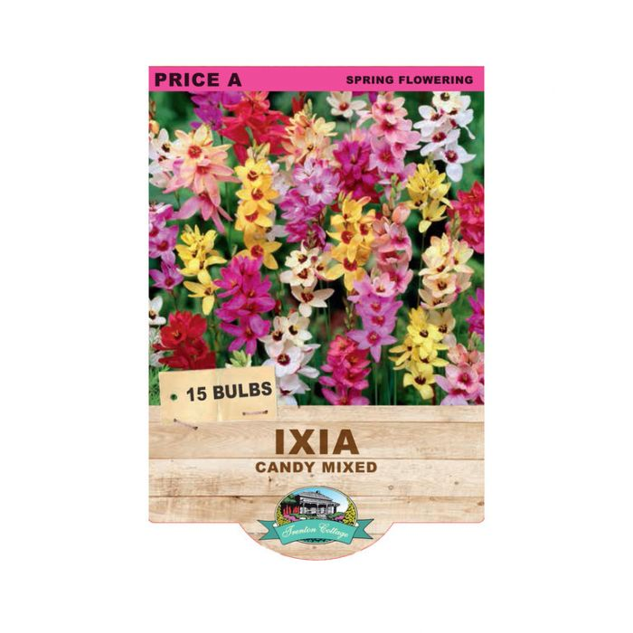 Ixia Candy Mixed  ] 9315774070731 - Flower Power