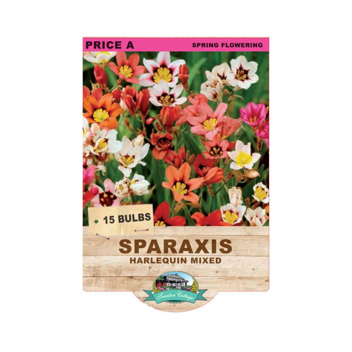 Sparaxis Harlequin Mixed  ] 9315774070816 - Flower Power