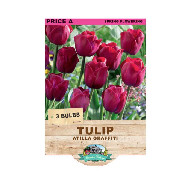 Tulip Atilla Graffiti  ] 9315774070823 - Flower Power