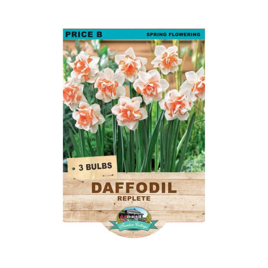 Daffodil Replete  ] 9315774070946 - Flower Power