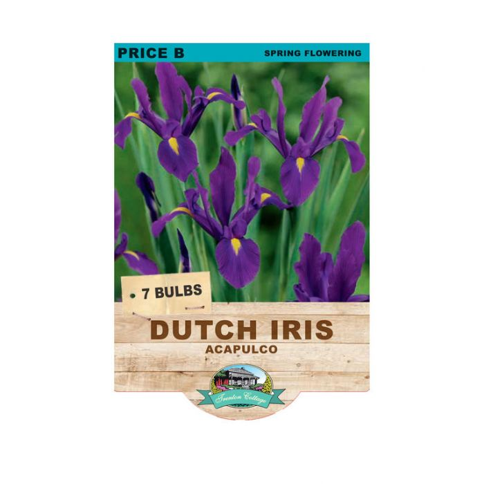 Dutch Iris Acapulco  ] 9315774070960 - Flower Power