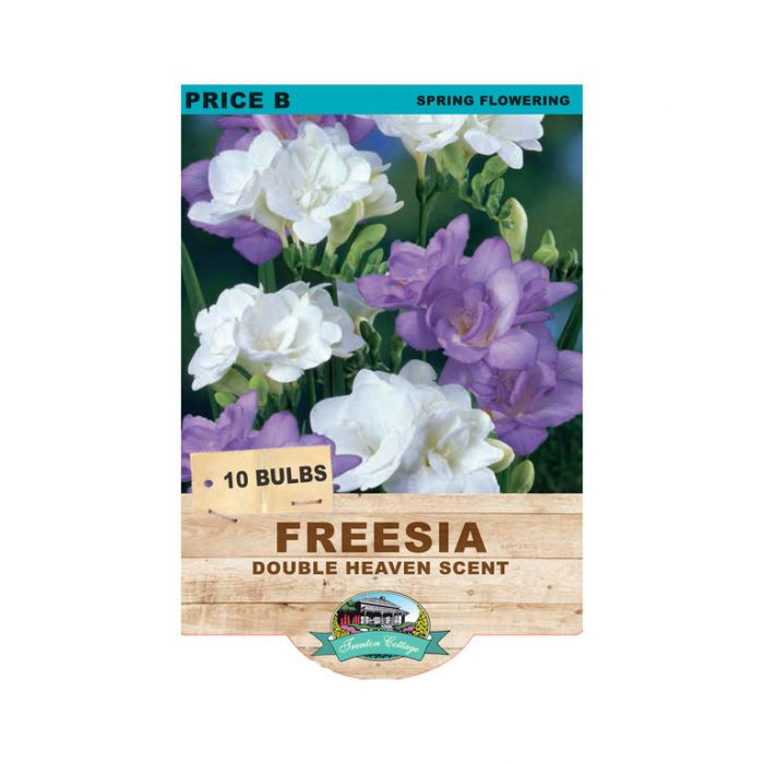 Freesia Double Heaven Scent  ] 9315774070977 - Flower Power