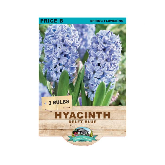 Hyacinth Delft Blue  ] 9315774071035 - Flower Power