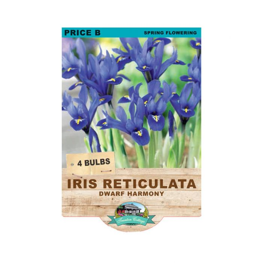 Iris Reticulata Dawf Harmony  ] 9315774071066 - Flower Power