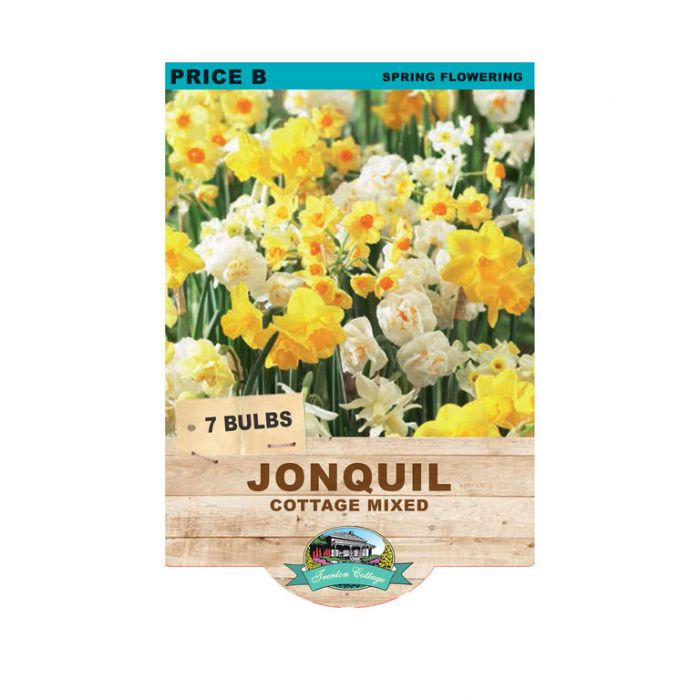 Jonquil Cottage Mixed  ] 9315774071080 - Flower Power