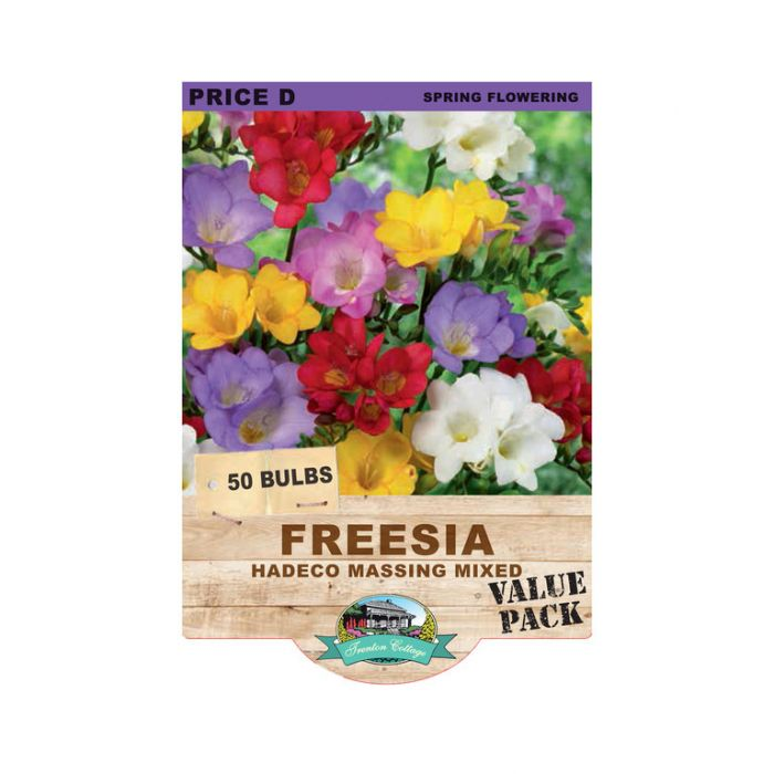 Freesia Hadeco Massing Mix  ] 9315774071295 - Flower Power