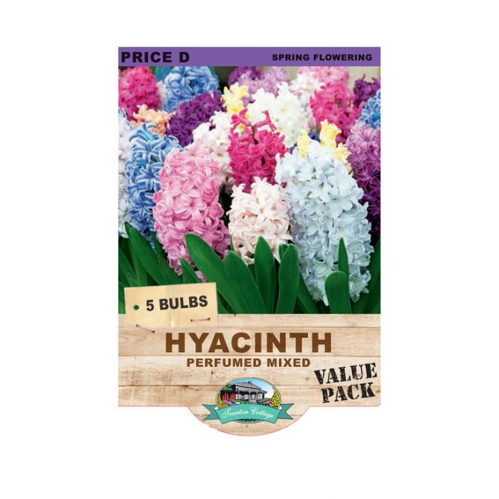 Hyacinth Perfumed Mixed  ] 9315774071318 - Flower Power