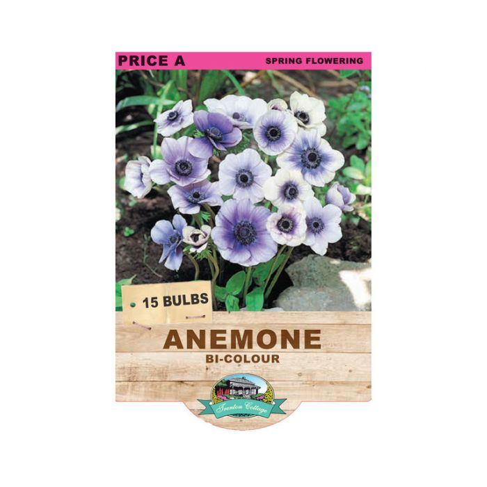 Anemone Bi-colour  ] 9315774071462 - Flower Power