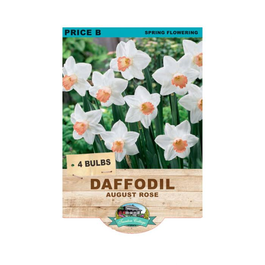 Daffodil August Rose  ] 9315774071493 - Flower Power