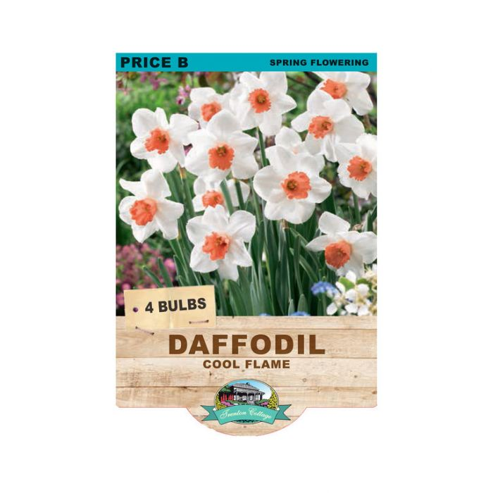 Daffodil Cool Flame  ] 9315774071509 - Flower Power