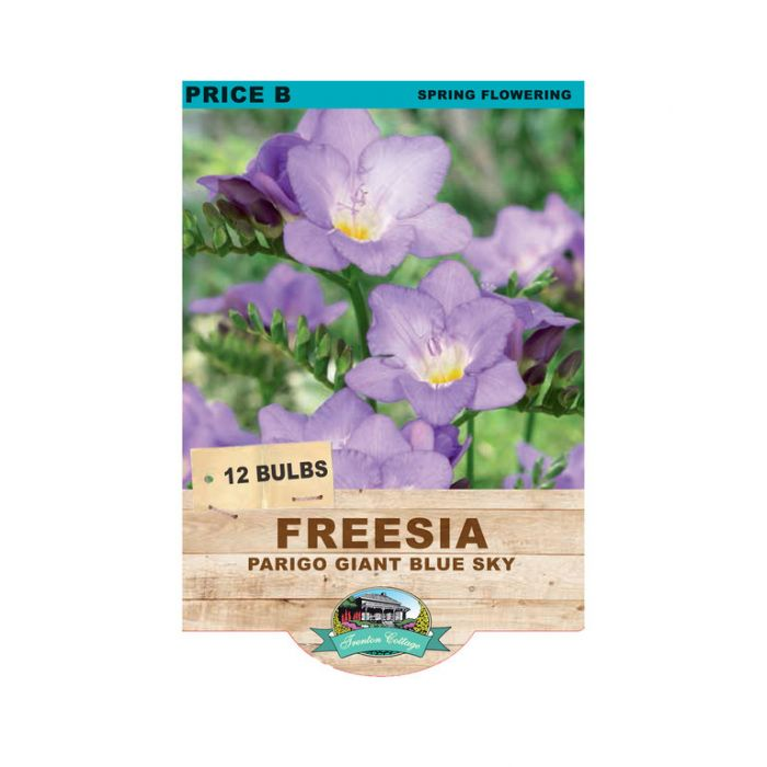 Freesia Parigo Blue Sky  ] 9315774071547 - Flower Power