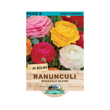 Ranunculi Bedazzle Blend  ] 9315774071639 - Flower Power