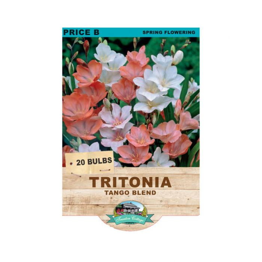 Tritona Tango Blend  ] 9315774071653 - Flower Power